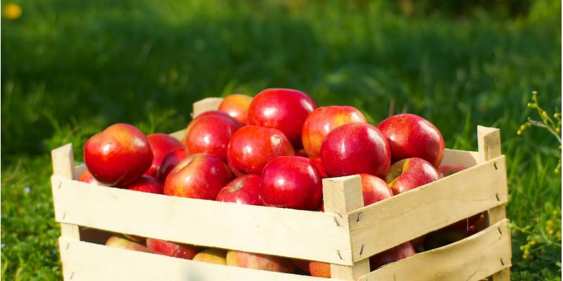 Apfelkiste in Apfelplantage
