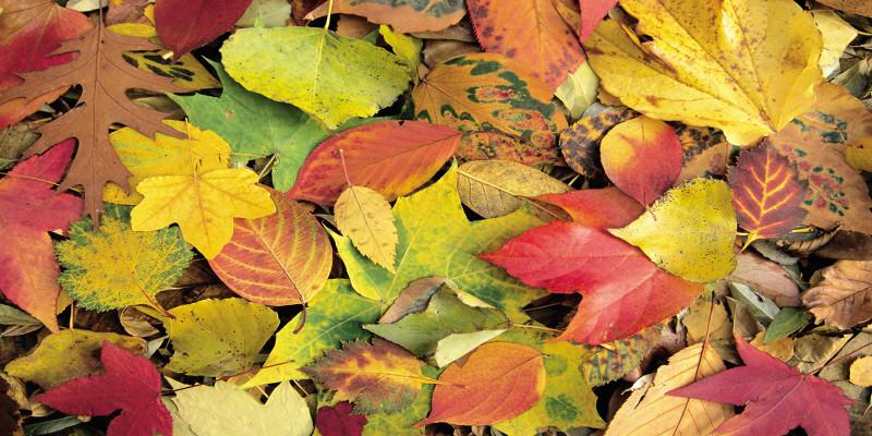 viele bunte Herbstblätter