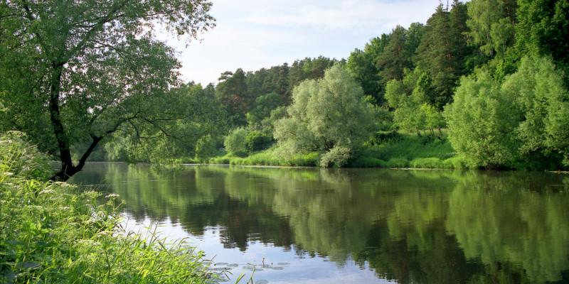 Ein idylisches Flussufer mit vielen grünen Bäumen, die sich im Wasser spiegeln