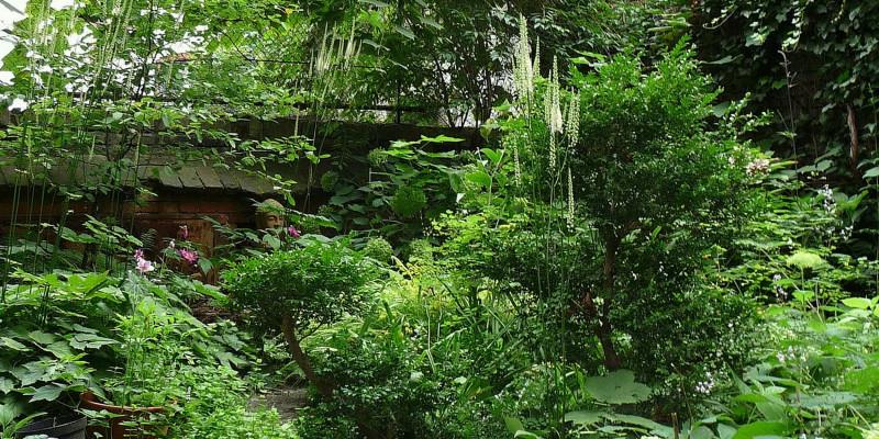 Pflanzen in einem Berliner Innenhof