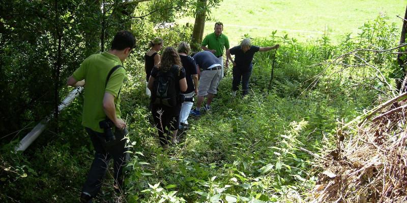Personengruppe läuft am Waldrand