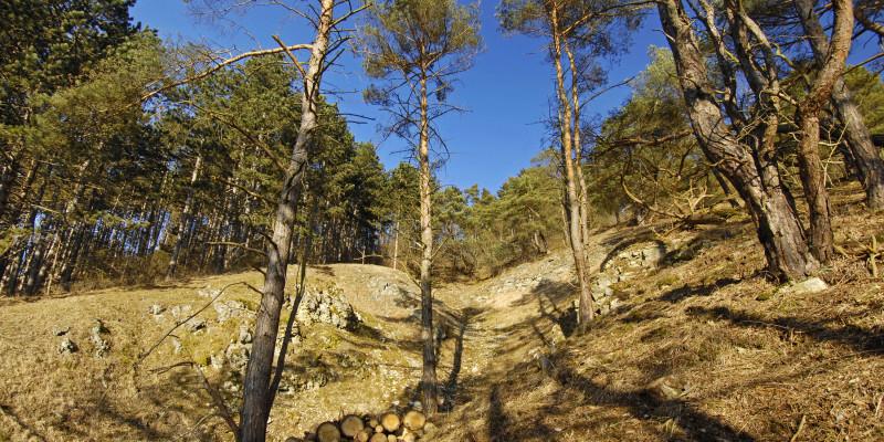 Vereinzelte Bäume an einem Hang des Heinbergs.