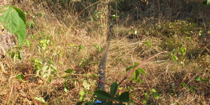 Schwarze Leitung liegt auf dem Waldboden im Unterholz.