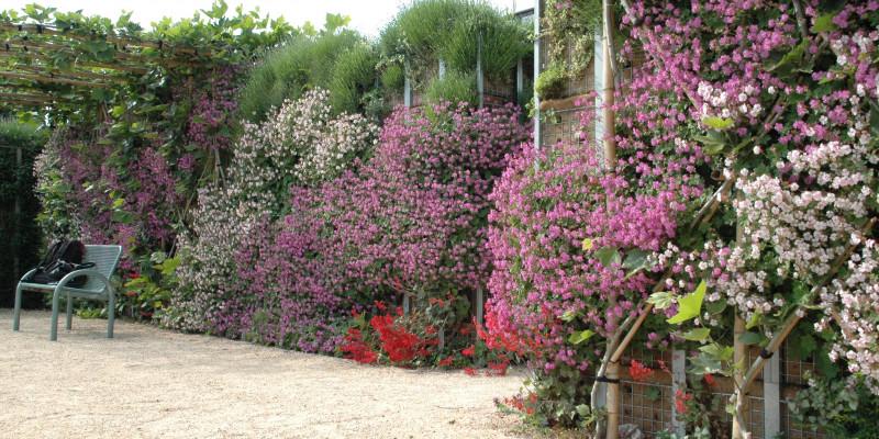 Blühende Pflanzen in den Farben weiß, lila, rot säumen einen Weg. Am Wegrand steht eine Bank.