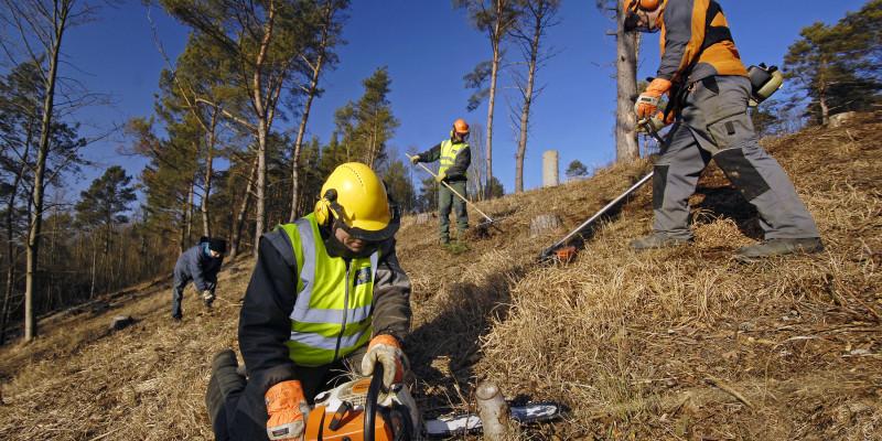 Pflegearbeiten mit Motorsägen und Haken zur Lichtung des Waldes.