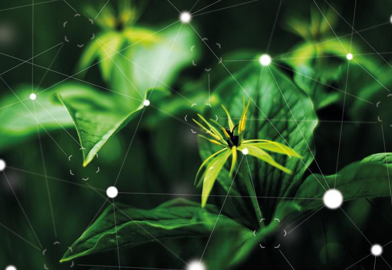 Bild von einer Pflanze