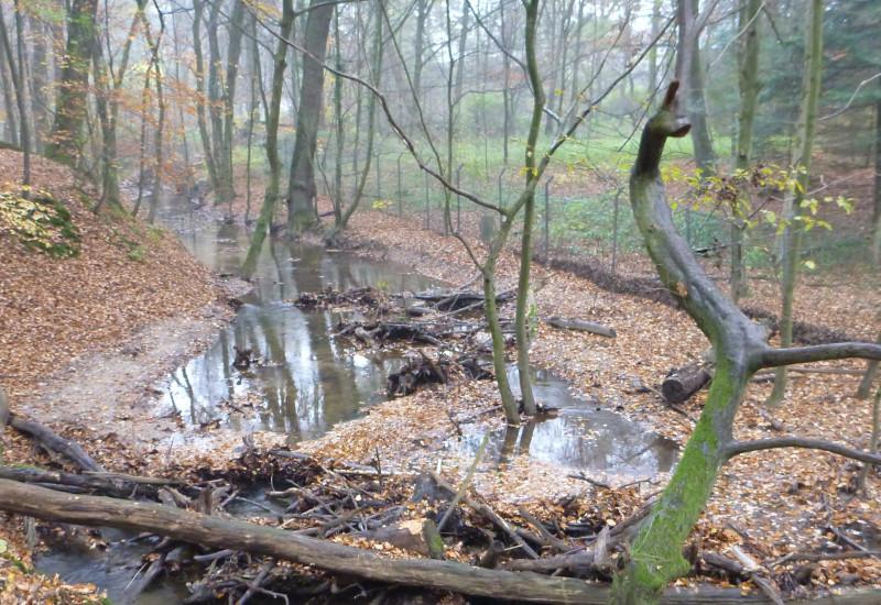 Foto: Waldbach mit querliegendem Stamm, an dem sich angeschwemmtes Holz und Laub angesammelt hat.