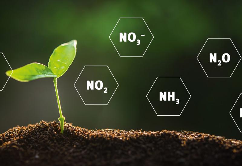 Eine Pflanze und Stickstoff-Verbindungen (Montage)