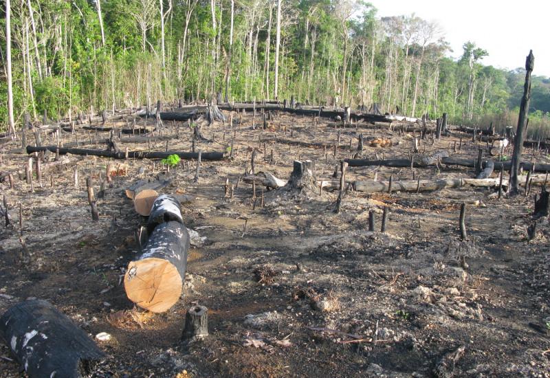 Abgeholzte Waldfläche