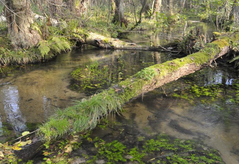 Der Fluss Nieplitz