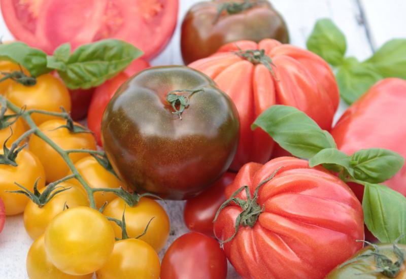 Sammlung von Tomaten in unterschiedlichen Formen und Farben