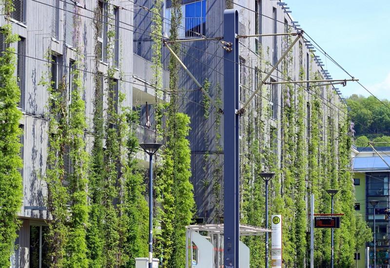 Eine begrünte Hauswand in der Stadt, vor der eine Straßenbahnhaltestelle steht.