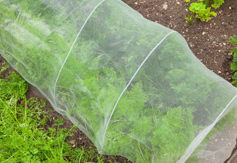 Gemüsebeet unter Kulturschutznetz