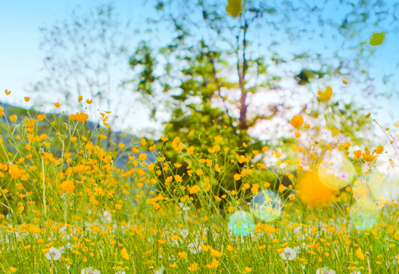 colourful flowering summer meadow