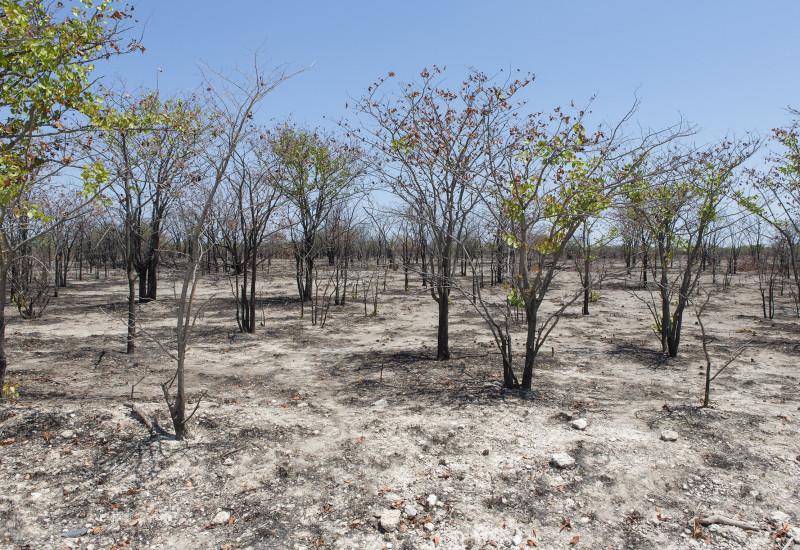 vertrockneter Boden mit vertrocknetem zum Teil verbrannten Sträuchern