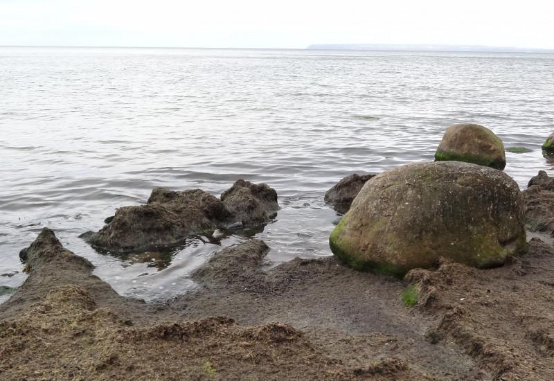 Am Strand von Kap Arkona eine große Fläche mit Algenmatten belegt