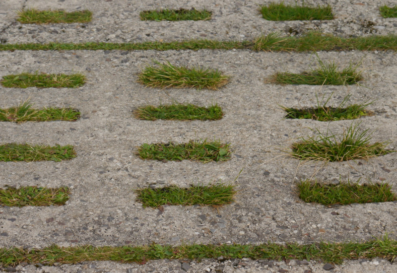 Photo of concrete slabs with gras growing through