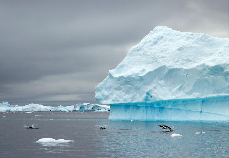 vor einem Eisberg springen Pinguine aus dem Meerwasser und tauchen spritzend wieder ein