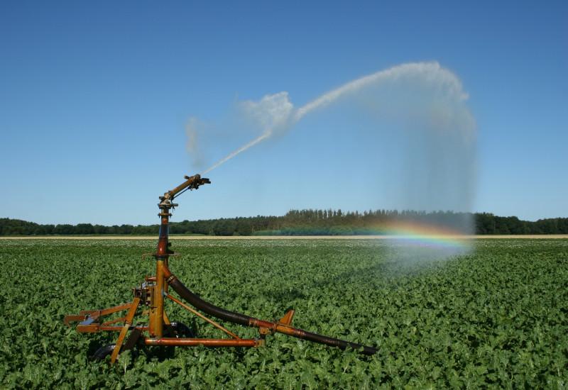 Ein Wassersprenger bewässert ein Feld