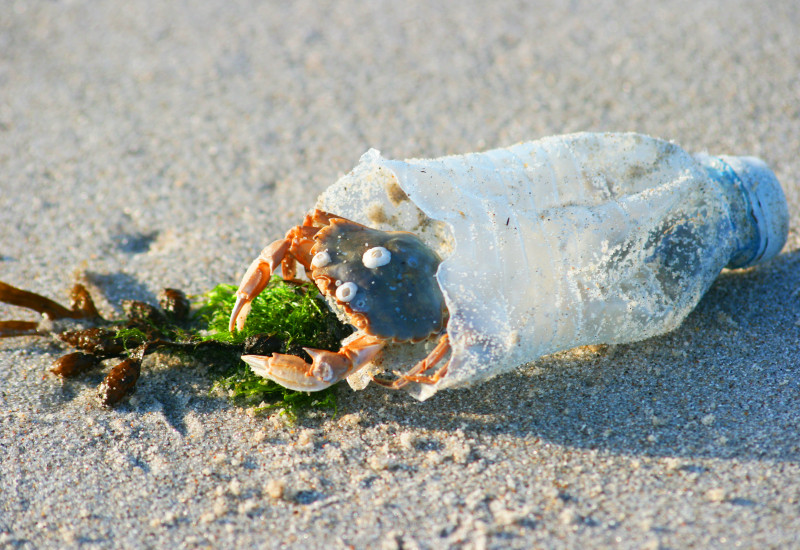 crab in a plastic bottle on the beach