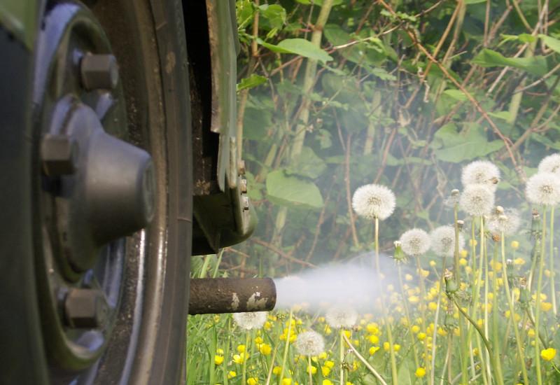 Pusteblumen am Wegesrand werden von Abgasen aus einem Autoauspuff eingenebelt