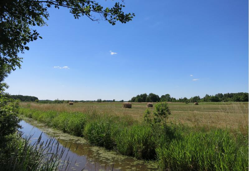 Entwässerungsgraben durch ein landwirtschaftlich genutztes  Niedermoor