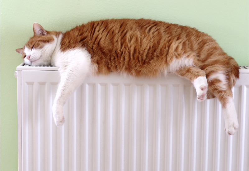 a cat is sleeping on a radiator