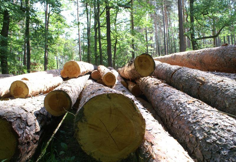 ein Stapel Baumstämme im Wald