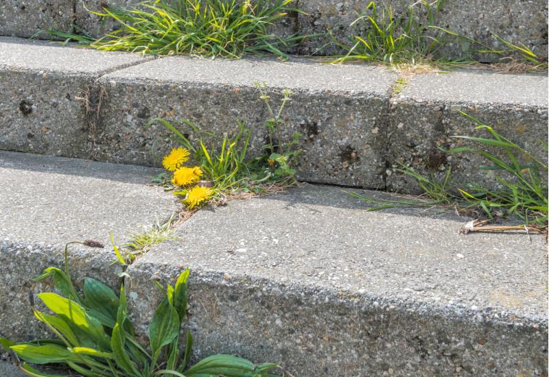 Löwenzahn und anderes Unkraut in Ritzen von Treppenstufen einer Steintreppe