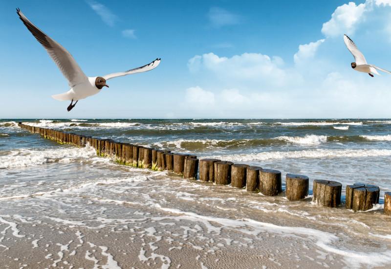 Ostseestrand mit Möwen und Buhnen
