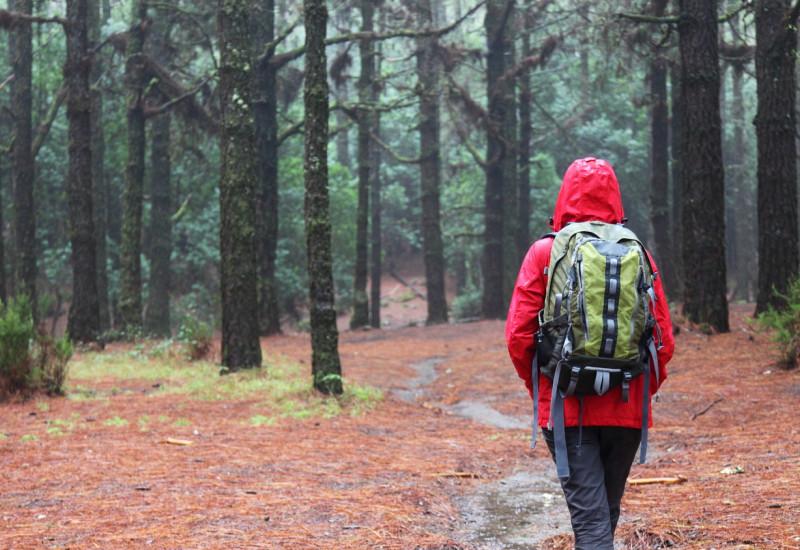 Wanderer mit roter Regenjacke und Rucksack wandert bei Regen durch einen Wald