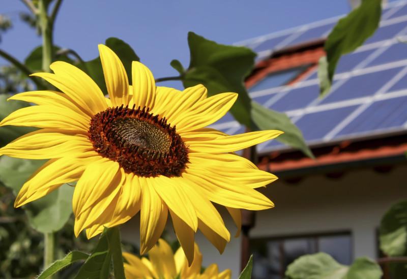 Einfamilienhaus mit Solarpanels auf dem Dach, im Vordergrund die Blüte einer Sonnenblume