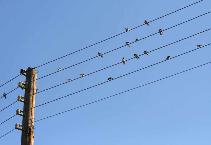 Strom-Freileitung auf der Schwalben vor blauem, wolkenlosem Himmel sitzen