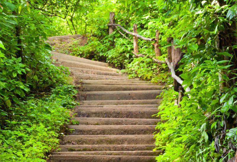 Treppe aufwärts durch einen dichten grünen Laubwald