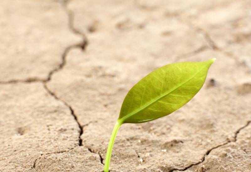 au einem ausgedörrten, rissigen Boden wächst ein einziges Blatt