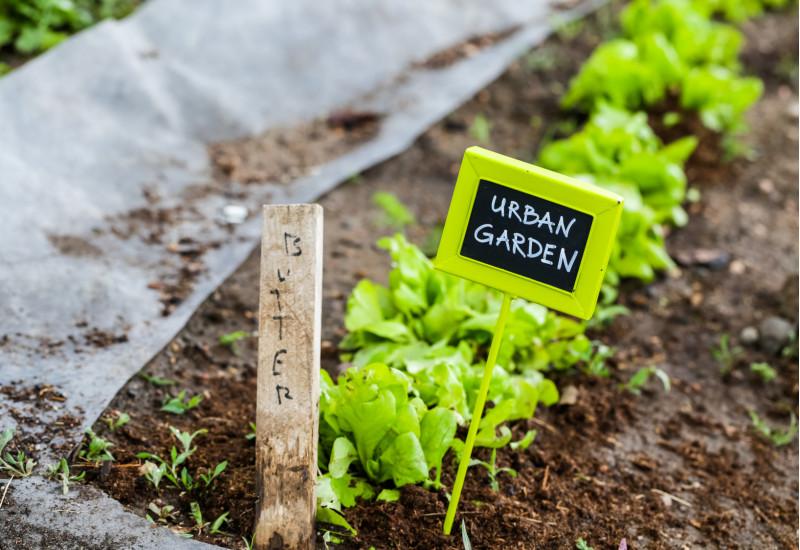 """an einer Reihe Salatpflanzen steckt ein Schildchen mit der Aufschrift """"Urban Garden"""""""
