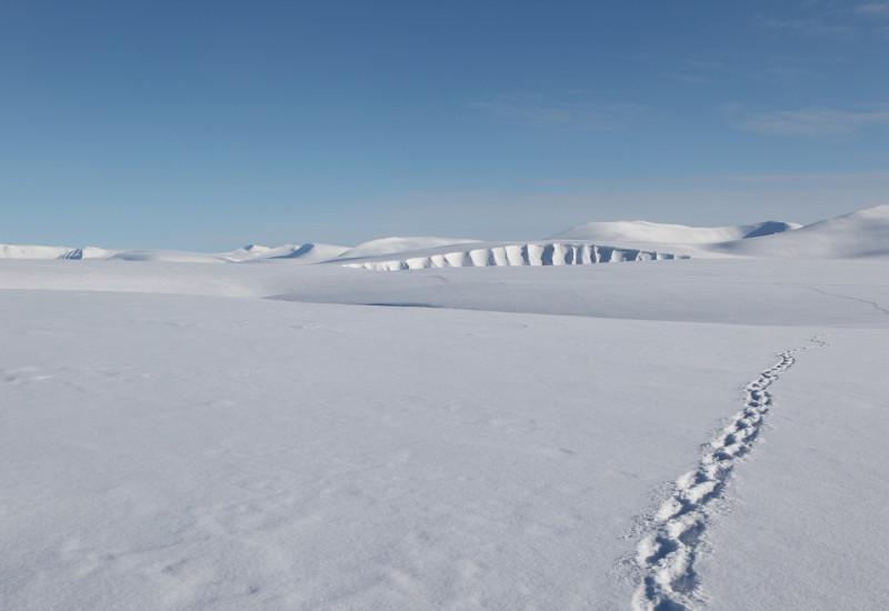 Fußabdrücke im arktischen Schnee