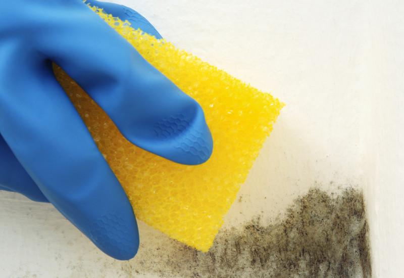 Eine Hand mit Gummihandschuh versucht Schimmel an einer Wand mit einem Schwamm zu entfernen