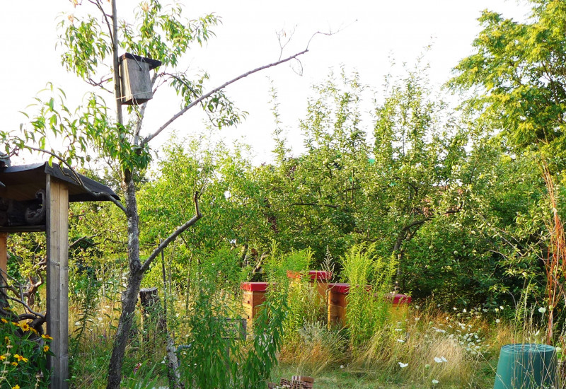 NABU-Naturgarten in der KGA 'Am Anger' in Berlin-Pankow