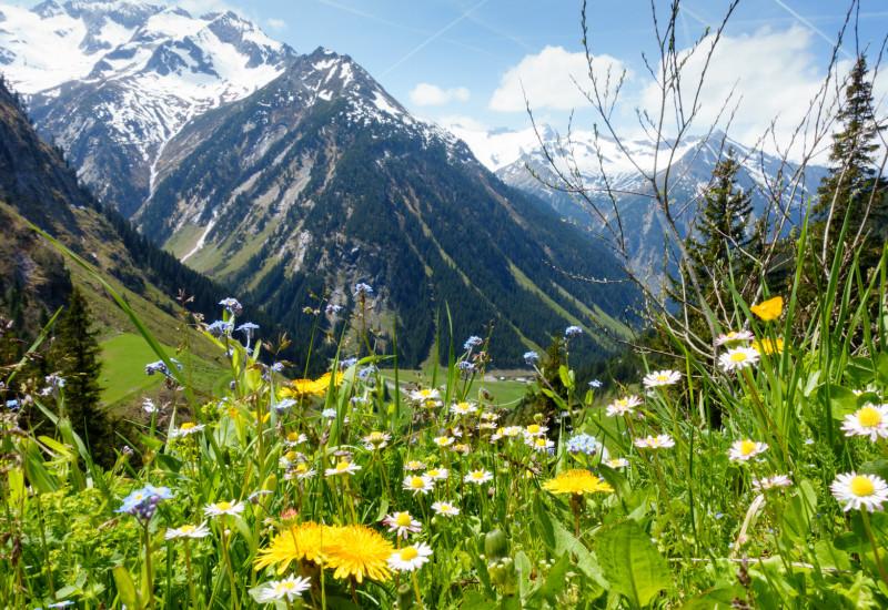 Alpen mit Wiese im Vordergrund