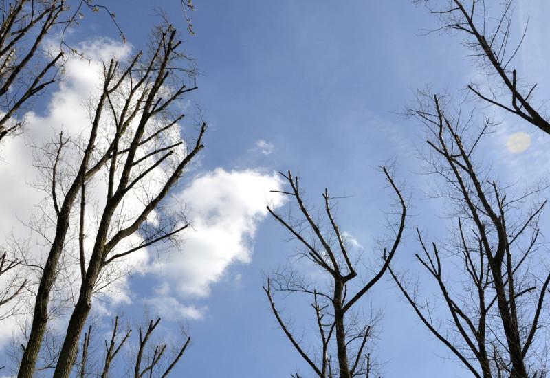 Frisch geschlagene Bäume liegen aufgestapelt im Herbstwald.