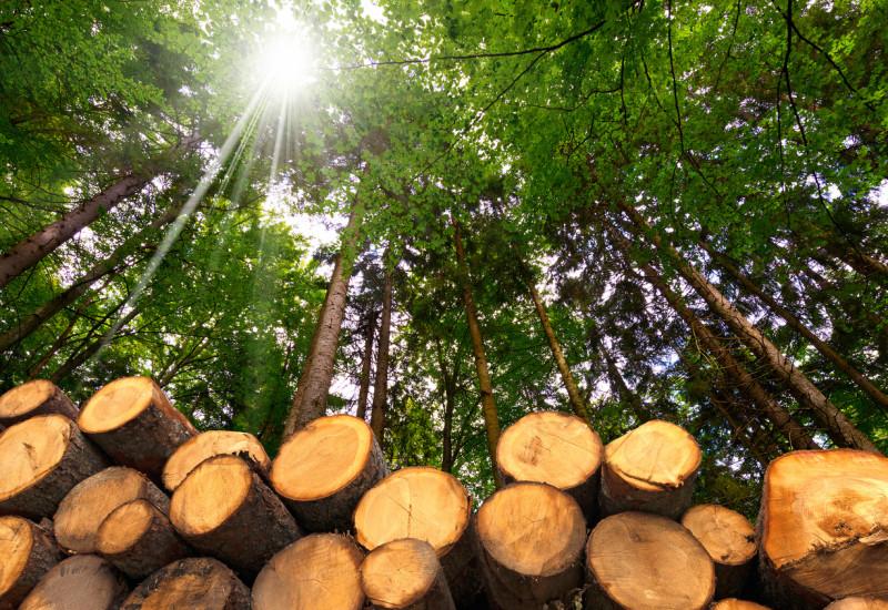 aufgestapelte, gefällte Bäume