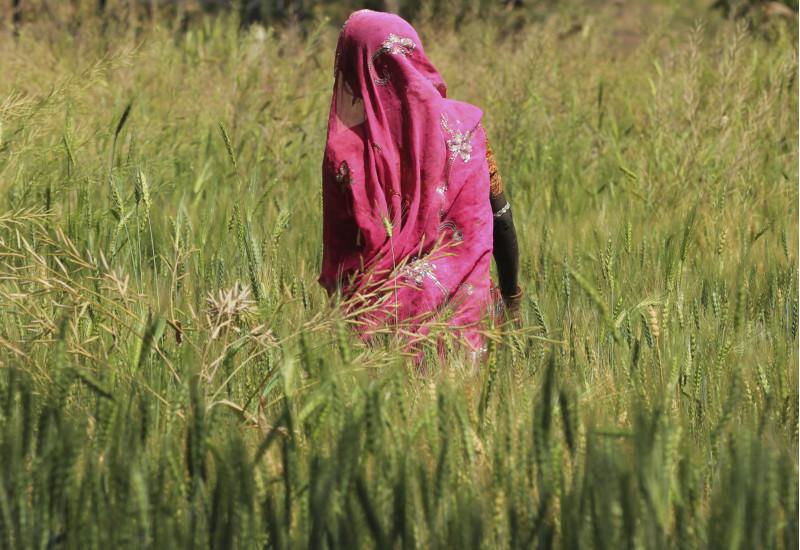 Frau im Weizenfeld