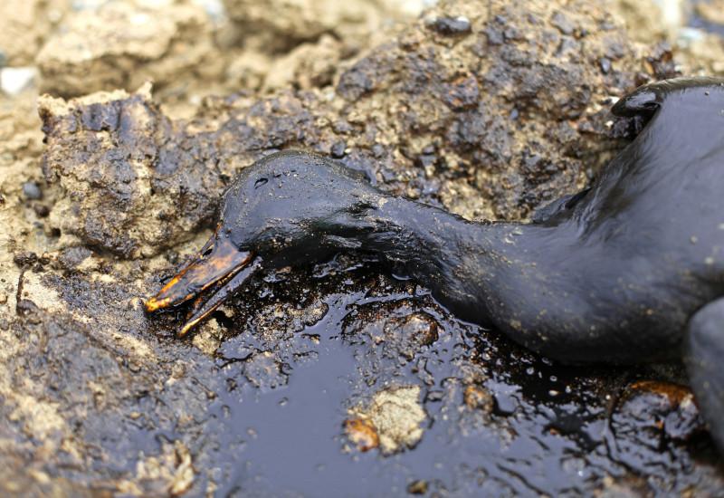 ölverschmierter toter Vogel am Meeresufer