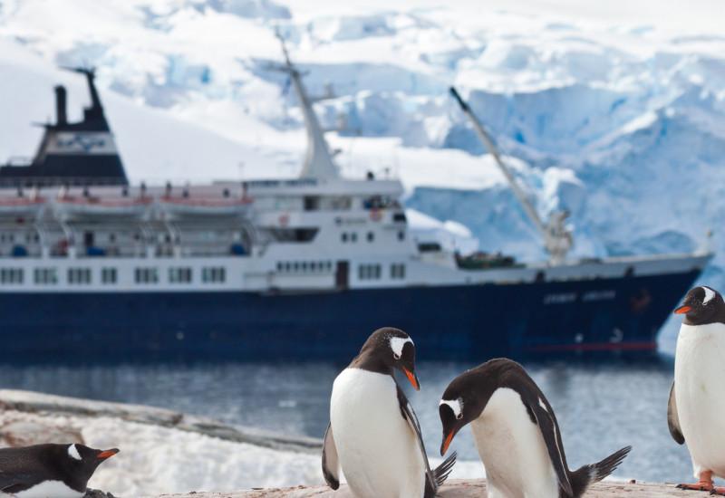 Pinguine vor Kreuzfahrtschiff in der Antarktis