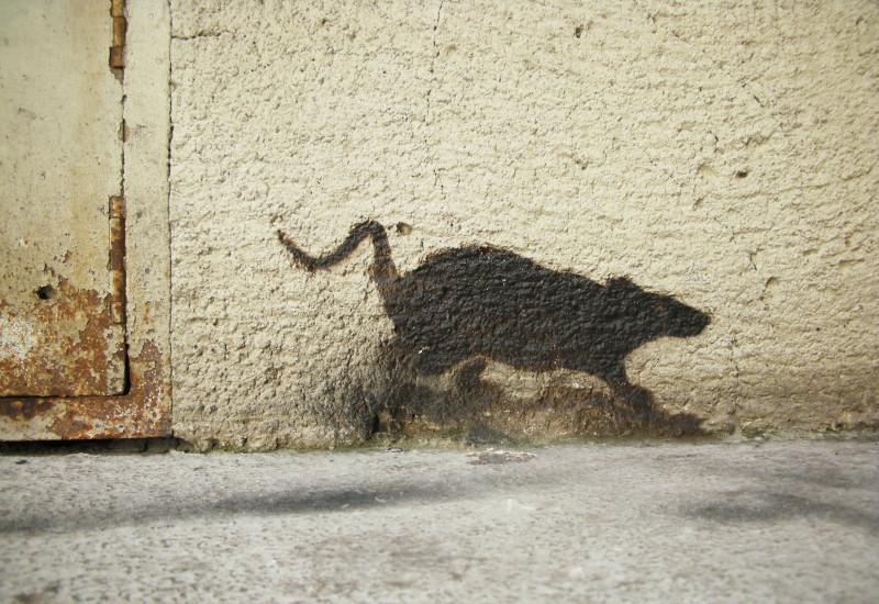 ein Rattenschatten an der Wand