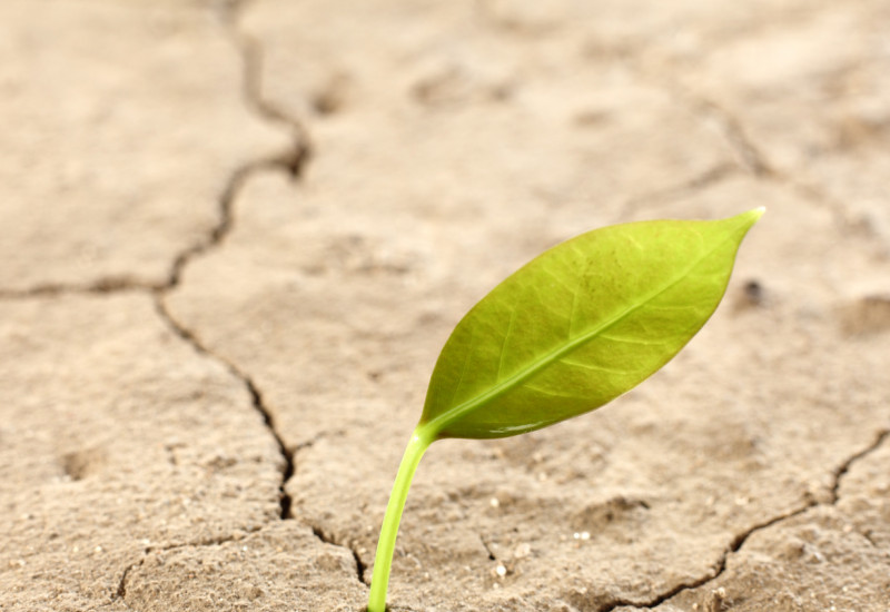 trockener Boden mit junger Pflanze