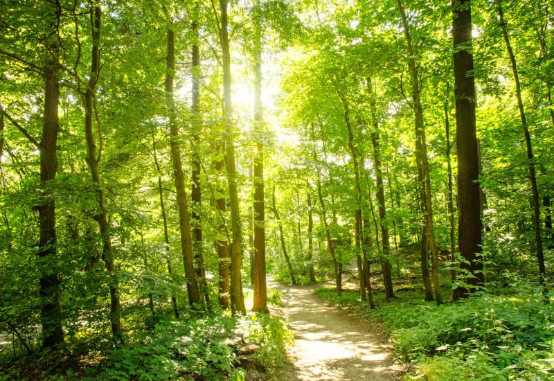 Sonnendurchfluteter Wald mit Weg