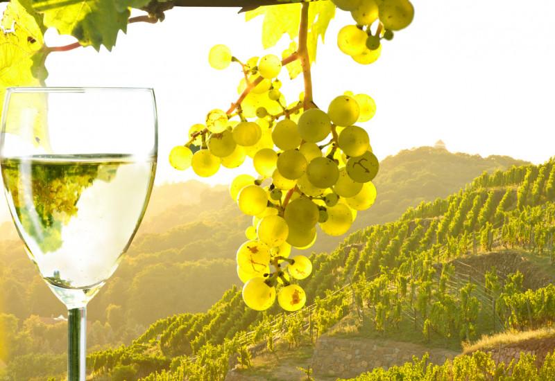 Weinberg, Weintraube und Weinglas