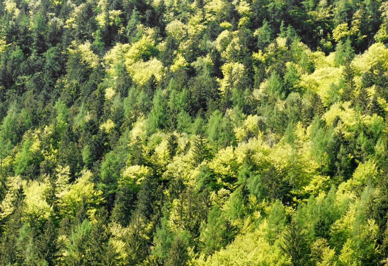 Luftaufnahme eines Mischwaldes im Frühjahr.